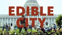 Edible City - Still