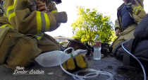 Fireman Saves Kitten - Dexter Britain
